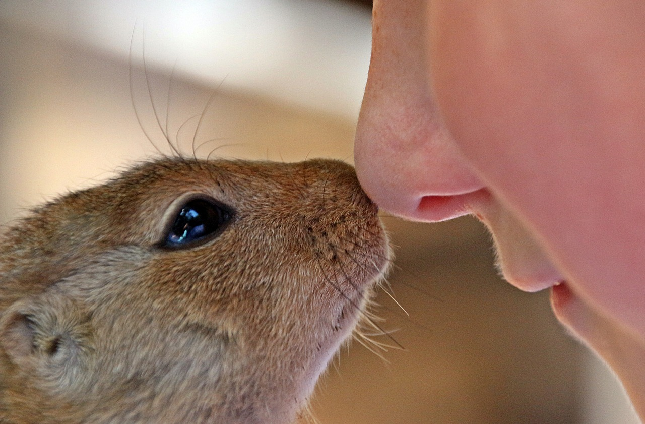 【鼻毛が伸びてかゆい】ムズムズ・チクチクする!!おすすめの鼻毛処理法を紹介!