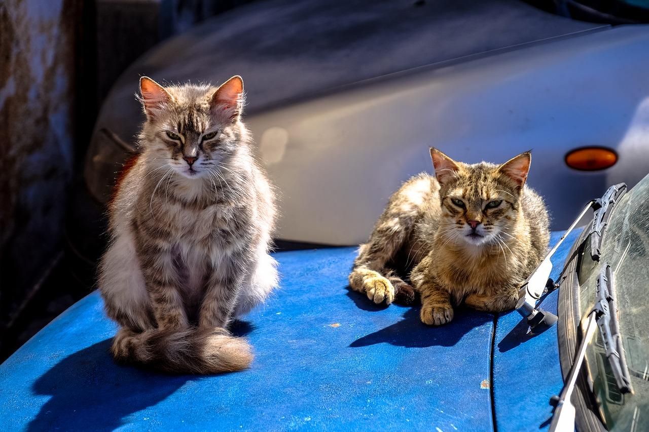 【車の猫よけ対策】車の上(ボンネット)に乗らせない方法!!マーキング対策も紹介!