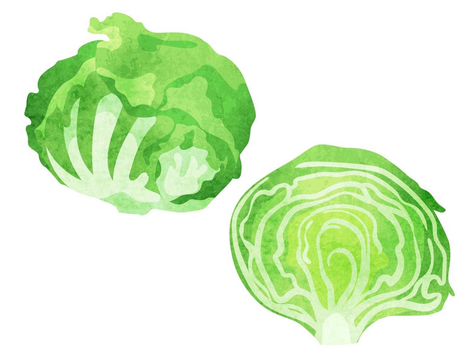 【レタスの食べ過ぎ】太る!?腹痛や下痢などの影響・適正量についても紹介!